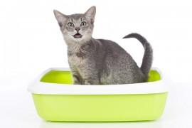 猫を飼っている人ならわかる!「トイレハイ」、「うんちハイ」とは?