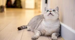 おもしろ猫動画5選!!