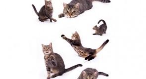 全国猫島特集!!