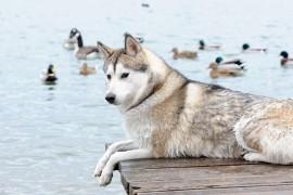 犬の「しつけ」について