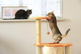 猫が自由に遊ぶことが出来る空間の作り方