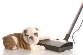 犬はなぜ掃除機を怖がるの?そしてその改善方法!