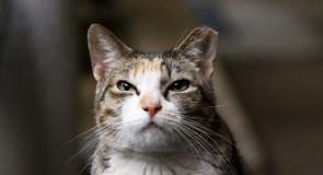 愛猫に名前をつけるメリット