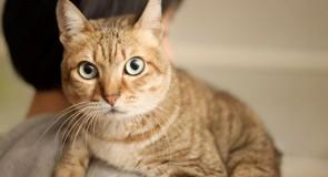 猫を飼う時の注意点!!(後編)