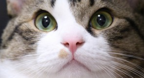 猫の排泄のお世話と健康管理