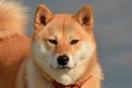 犬の噛み癖のしつけ方