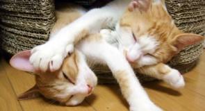 衝撃!!奇跡的に撮れた猫画像10選(Twitter編)