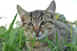 知って損なし!猫の幸福感と不快感(前編)