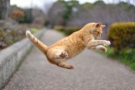 工夫を凝らして猫の食欲を改善する方法(前編)
