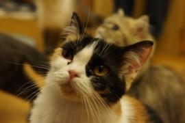 【厳選】笑える猫画像&動画5選!(Facebook編)