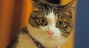 猫の免疫力を最大限高めるサプリメント5選!!