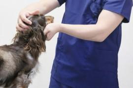 熊本地震から学ぶ!ペットの避難や救急で診てもらえる病院10選【東京版】