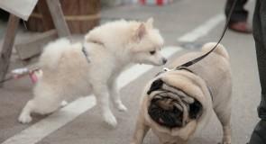 犬のリードの引っ張り癖の直し方