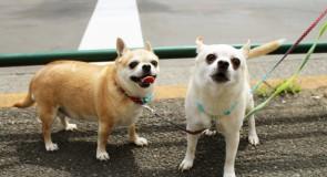 費用や普及率は!?犬、猫、ペットの「マイクロチップ」について考えてみよう!