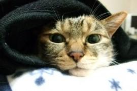 ペットブームでも特に「猫」ブーム!猫は優秀なハンター!