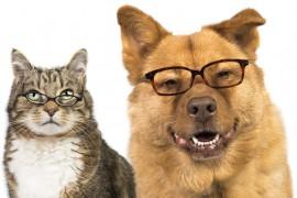 ペットブームだから入りたい!犬、猫「ペット保険」の値段を徹底比較。