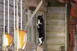 猫ちゃんと楽しく暮らせる賃貸物件(関東編)