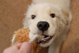 犬に食べさせてはいけない食べ物とその危険性