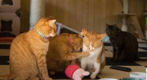 複数の猫を飼う場合に仲良くしてもらう方法