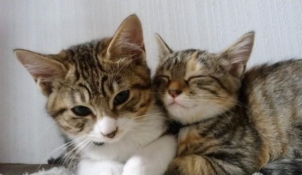 なぜ猫はかわいいのか!?その理由は・・・。