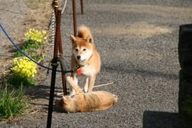 犬、猫を飼っている人の性格とは?