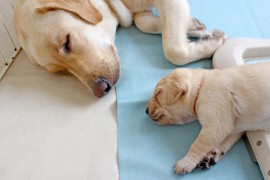 犬と泊まれるお薦めホテル3選