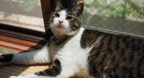 猫ちゃんと楽しく暮らせる賃貸物件(関西・四国編)