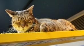 おすすめ!安くて評判の良い猫カフェ10選【大阪版】