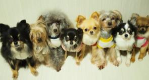 犬の防災マニュアル(避難グッズ編)