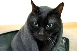 黒色にこだわった猫お世話アイテム、インテリア