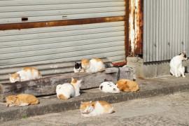猫はどうして集会するの?