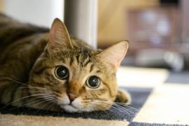 猫を飼うとこれだけメリットがある。