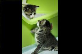 猫の代表的なシステムトイレを紹介!
