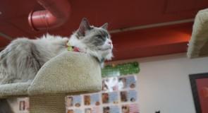 おすすめ!安くて評判の良い猫カフェ10選【東京版】