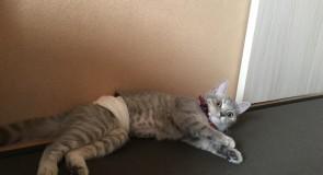 猫の避妊、去勢の方法