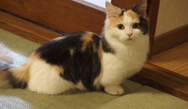 屋外飼いのための猫小屋紹介