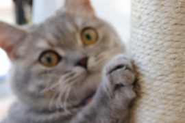 おもしろ爪研ぎ&猫ハウス10選