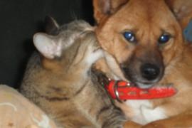 ペットブーム!猫と犬が飼われる比率が景気・不景気に関係する?