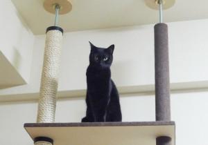 猫も飼い主も満足!超おしゃれなキャットタワー8選