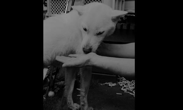 日本犬、紀州犬の特徴