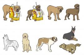 日本犬、四国犬の特徴
