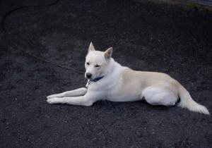 犬の避妊、去勢の方法