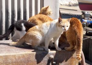無人島を購入して日本から独立した「猫の国」を作る計画がある!?