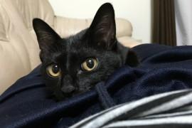猫の里親になる方法・注意点