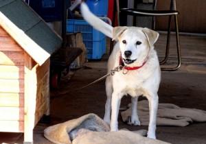 犬の予防注射の方法と費用