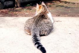 猫の尻尾の状態で感情を理解しよう!