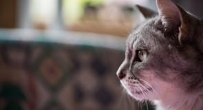 アメリカにおける「ペット虐待」、「DV(ドメスティック・バイオレンス)」の現状