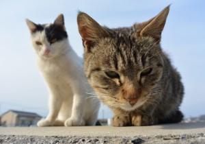 猫の尿路結石の予防法