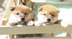 商品ではなく「ペット」として動物を取り扱う画期的な法をカリフォルニア州が初承認!?