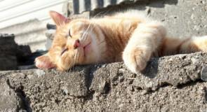 熊本の猫島「湯島」の詳細